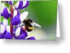 Honey Nut Lupin Greeting Card