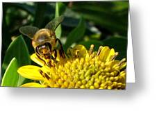 Honey Starts Here Greeting Card