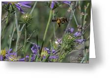 Honeybee 2 Greeting Card