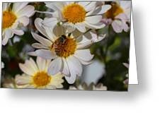 Honeybee And Daisy Mums Greeting Card