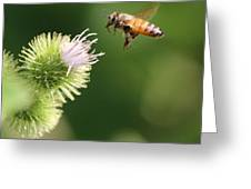 Honeybee Flying To Thistle  Greeting Card