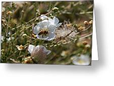 Honeybee Gathering From A White Flower Greeting Card