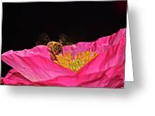 Honeybee In Flight 010 Greeting Card