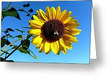 Honeybee On A Sunflower Greeting Card