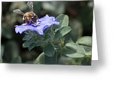 Honeybee On Blue Daze Greeting Card