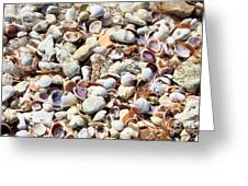 Honeymoon Island Shells Greeting Card