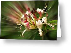 Honeysuckle Breeze Greeting Card