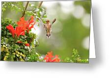 Honeysuckle Hummer Greeting Card
