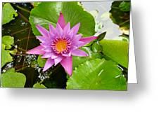 Honolulu Water Lily Greeting Card