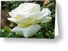 Honor Hybrid Tea Greeting Card