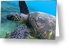Honu Hello Greeting Card