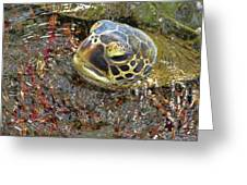 Honu In The Water Greeting Card