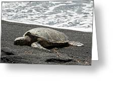 Honu Sleeping On The Shoreline At Punalu'u Greeting Card