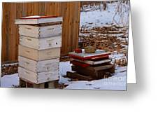 Hony Hibernation Greeting Card
