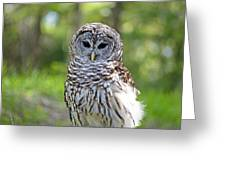 Hoo Are You Greeting Card