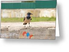 Hooded Crow On A Wall Greeting Card