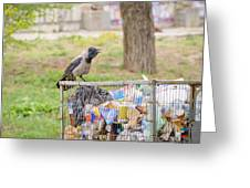 Hooded Crow With Garbage Greeting Card