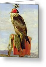 Hooded Falcon Greeting Card by Sir Edwin Landseer