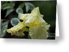 Hooded Iris Greeting Card