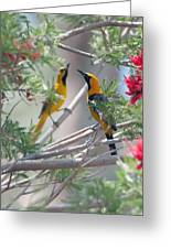 Hooded Oriole Duo Greeting Card