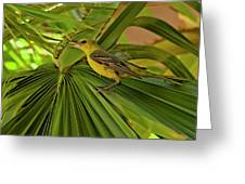 Hooded Oriole H01 Greeting Card