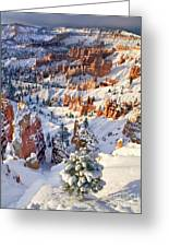 Hoodoos And Fir Tree In Winter Bryce Canyon Np Utah Greeting Card