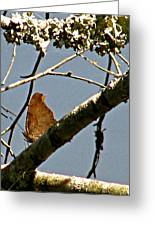 Hook Winged Butterfly Greeting Card