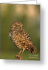 Hoot A Burrowing Owl Portrait Greeting Card