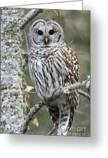 Hoot Hoot Hoot Are You Greeting Card by Beve Brown-Clark Photography