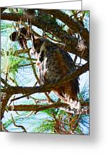 Hoot Is Down There? Greeting Card