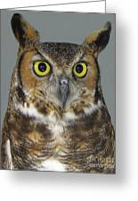 Hoot-owl - I'm Looking At You Greeting Card