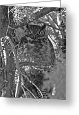 Hootie Owl  Greeting Card