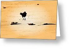 Hop Like A Bunny Bird - Jersey Shore Greeting Card