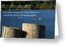 Hope For A Tree Greeting Card by James Eddy