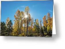 Hope For Fall  Greeting Card