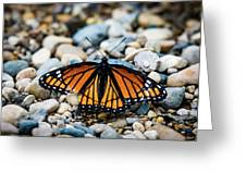 Hope Of The Monarch Butterfly Greeting Card