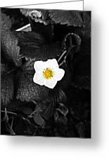 Hope Tucked Away In The Petals  Greeting Card