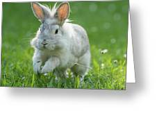 Hopping Rabbit Greeting Card