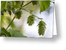 Hops For Pickin' Greeting Card