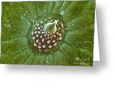 Hops Leaf, Sem Greeting Card