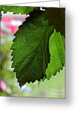 Hops Leaves Greeting Card