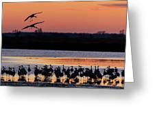 Horicon Marsh Cranes #5 Greeting Card