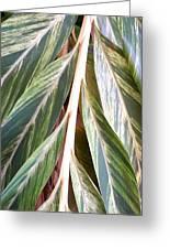 Horizon Of Palm Greeting Card