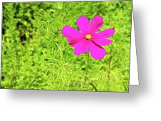 Pink Cosmos II Greeting Card