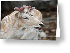 Horn Beginnings Greeting Card