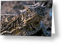 Horn Toad Greeting Card