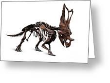 Horned Dinosaur Skeleton Greeting Card