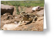 Horned Lizard Greeting Card