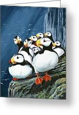 Horned Puffins At Rest Greeting Card