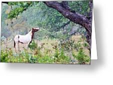 Horse 018 Greeting Card
